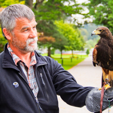 The Hawk has Landed – Ireland School of Falconry