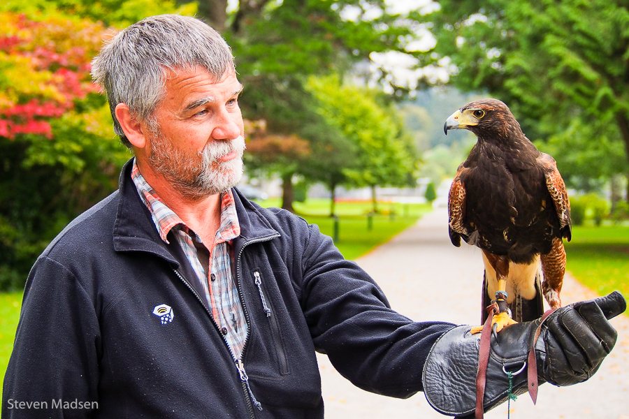 Steve and the Hawk